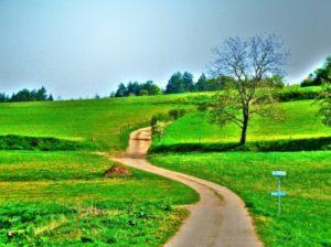 summer_landscape_202550
